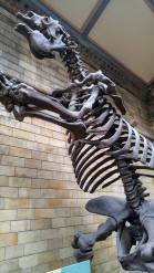 Extinct Giant Ground Sloth