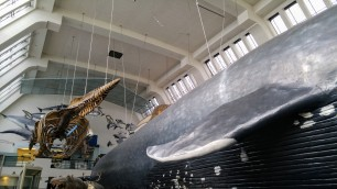 Reminded me of the NYC Hall in which the Blue Whale hung from the ceiling.